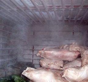 黑龙江肉类速冻冷库